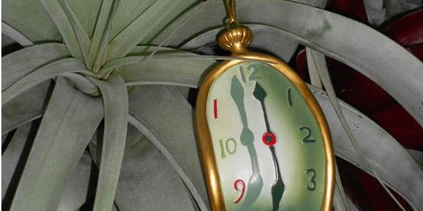 soft watch ornament hanging on a succulent
