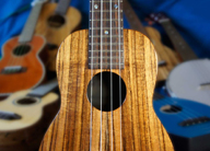 Music in the Museum: Tampa Bay Ukulele Society