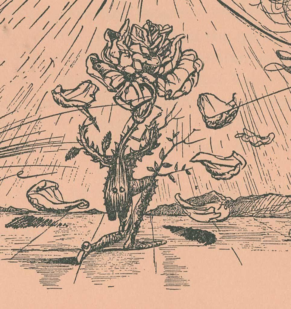 rose drawing detail