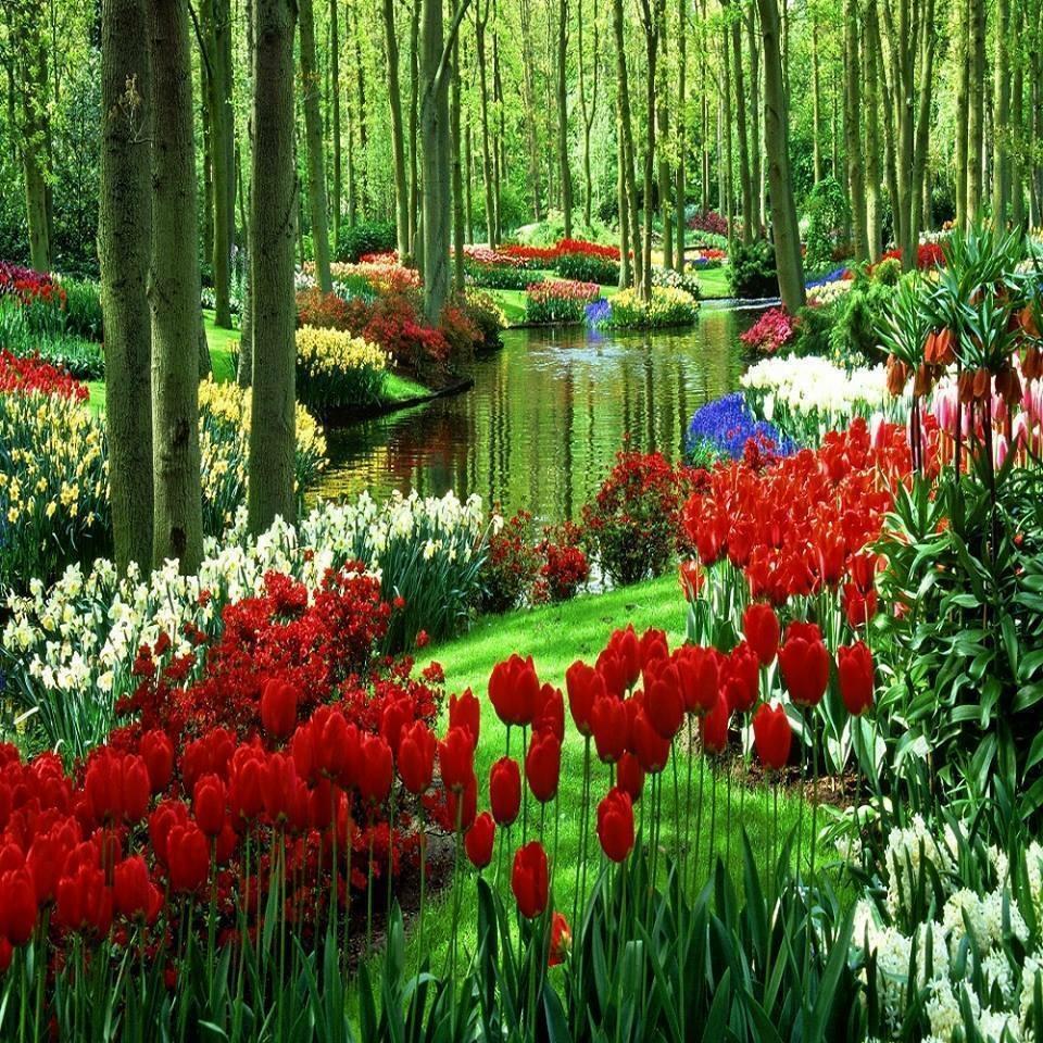 Tulip Festival Mt Vernon, WA by Janis Harland