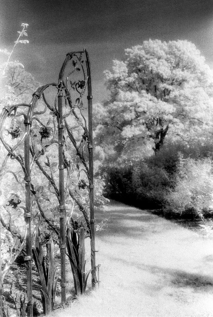 Rose Gate by Ellen Schneider